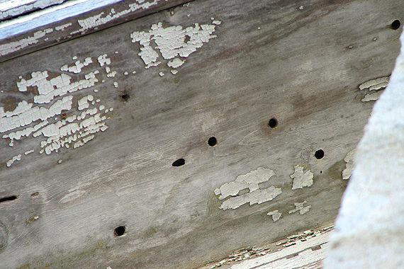How To Detect Termites In Your Home Termite Home Detection