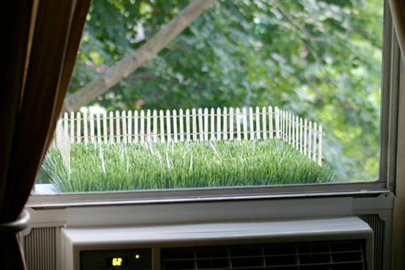 Backyard Privacy Ideas Outdoor Privacy Ideas Houselogic